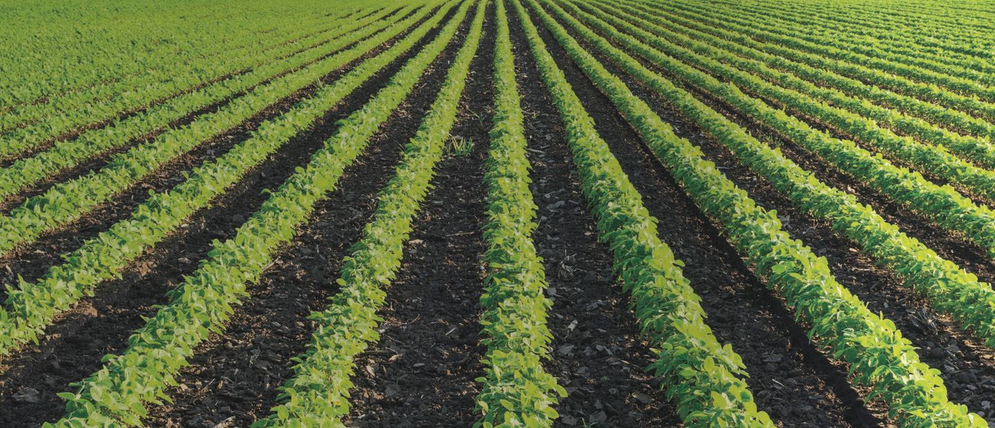 Precision irrigation solutions for open field crops