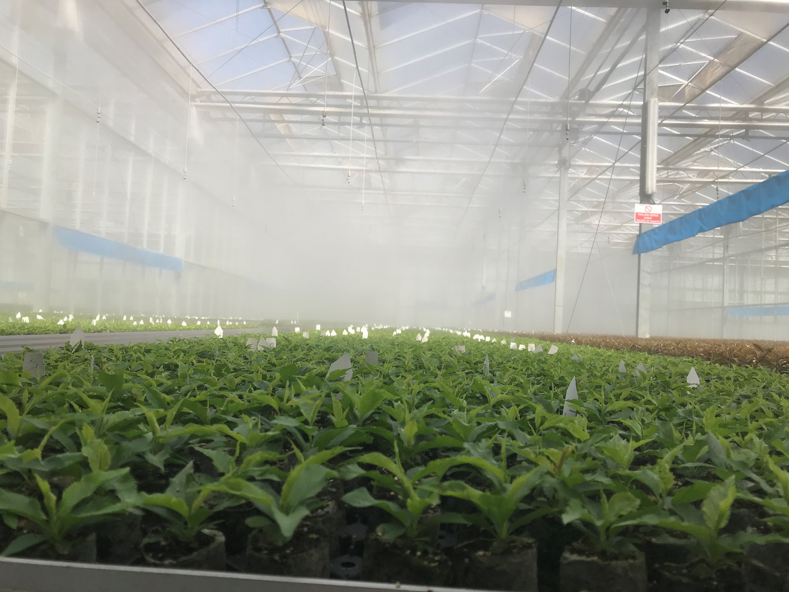 Protected crops