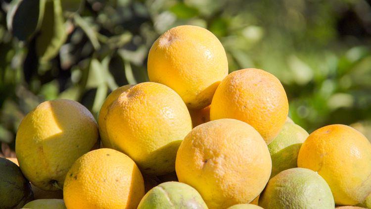 Precision irrigation for citrus